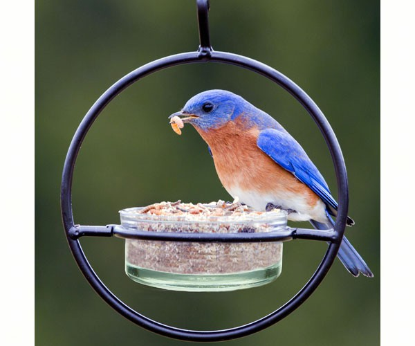 Sphere Bluebird Feeder