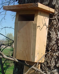 Slotted Bluebird House